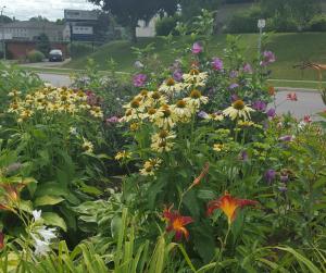 hospice gardens (1)