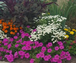 hospice gardens (5)