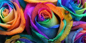 Rainbow Bereavement Support Group