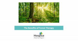 The Benefits of Forest Therapy blog post