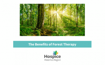 The Benefits of Forest Therapy