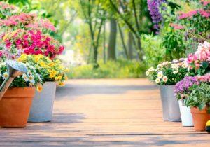 Hospice Waterloo - Let Love Bloom